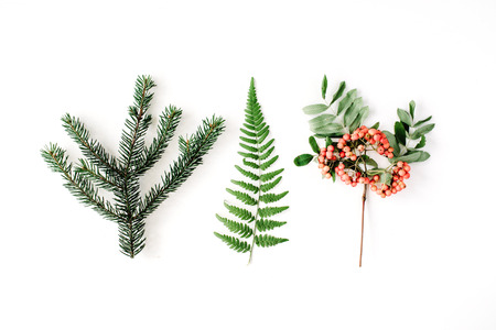 mountain ash: branches of pine needles, ferns and mountain ash. flat lay, top view autumn wallpaper