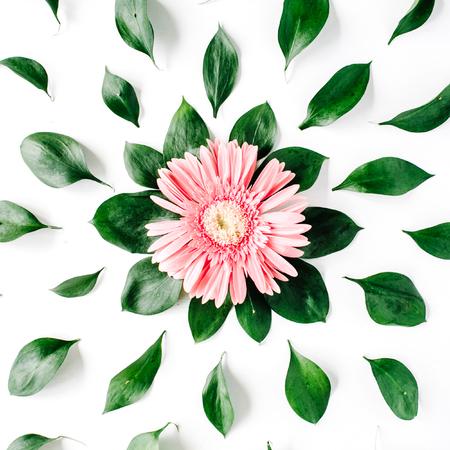 gerbera daisy: Pink gerbera daisy pattern on white background. Flat lay Stock Photo