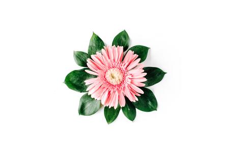 gerbera daisy: Pink gerbera daisy on white background. Flat lay Stock Photo