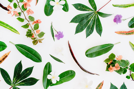 topical exotic colored leaf pattern on white background. flat lay, top view