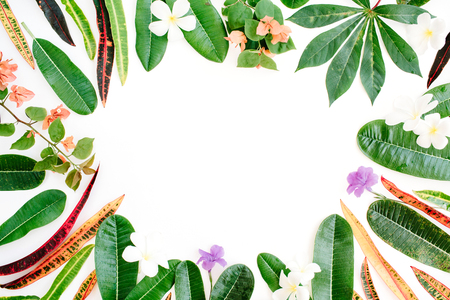 topical exotic colored leaf frame on white background. flat lay, top view