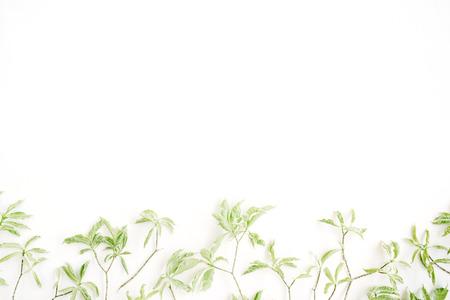 minimal: green leaf pattern on white background. flat lay header Stock Photo