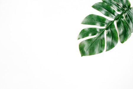 Tropical palm leaf. Flat lay, top view