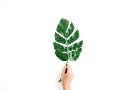 Hand holding tropical palm leaf. Flat lay, top view