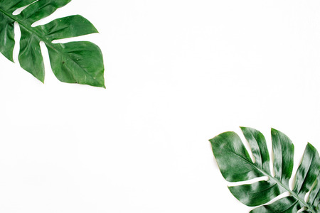 Tropical palm leaves. Flat lay, top view