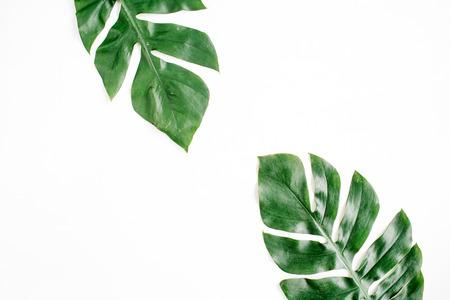 Folhas de palmeira tropical. Vista plana leiga