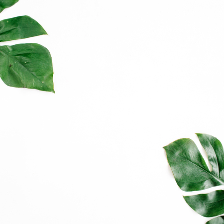 tropical leaves: Tropical palm leaves. Flat lay, top view