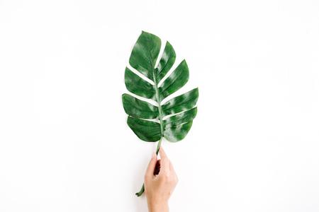 Hand holding tropical palm leaf. Flat lay, top view 版權商用圖片