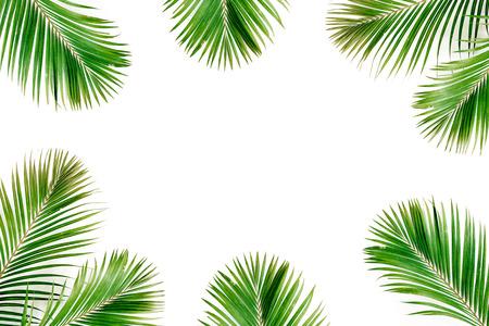 열 대 이국적인 팜 분기 프레임 흰색 배경에 고립. 평면 누워, 상위 뷰, mockup.