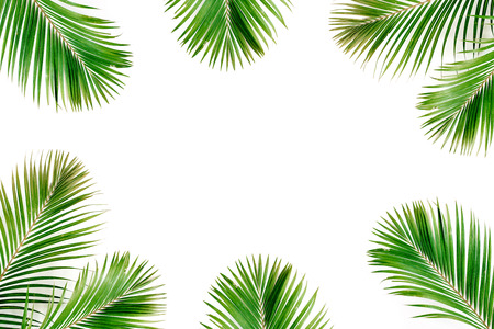 Tropical exotic palm branches frame isolated on white background. Flat lay, top view, mockup. Archivio Fotografico