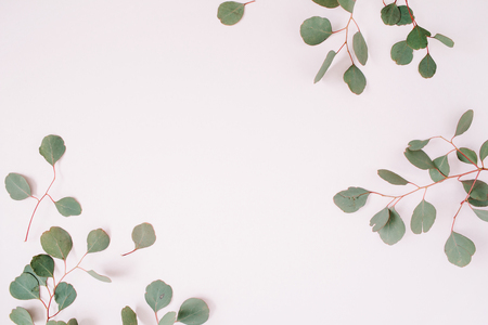 Beautiful eucalyptus branches frame on pale pastel pink background. Flat lay, top view. Lifestyle composition.