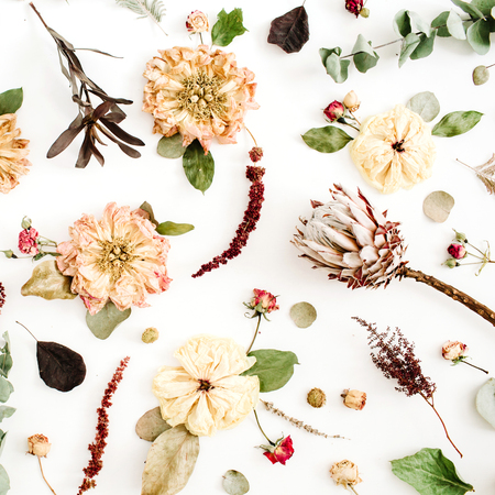 Dried flowers background: beige peony, protea, eucalyptus branches, roses on white background. Flat lay, top view.
