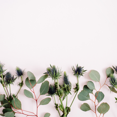 Beautiful eucalyptus branches and eringium flowers on pale pastel pink background. Flat lay, top view. Lifestyle composition.