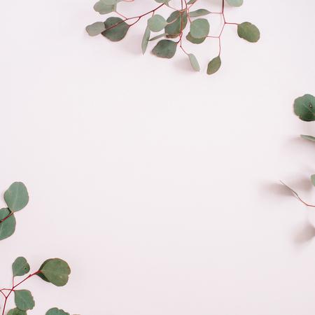 창백한 파스텔 핑크 배경에 아름 다운 유 칼 리 나무 분기 프레임. 평면 누워, 상위 뷰입니다. 라이프 스타일 성분입니다. 스톡 콘텐츠