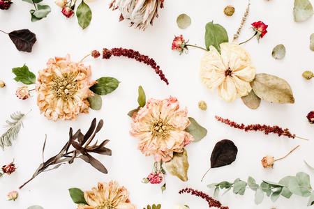Dried flowers background: beige peony, protea, eucalyptus branches, roses on white background. Flat lay, top view. Floral background