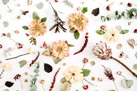 Dried flowers texture pattern: beige peony, protea, eucalyptus branches, roses on white background. Flat lay, top view. Floral background Stock Photo