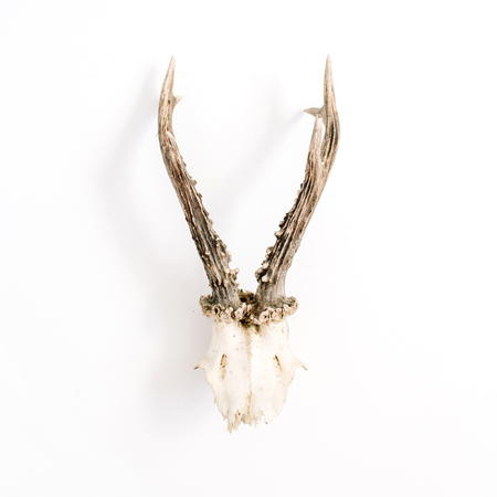 Goat horns on white background. Flat lay, top view hipster concept.