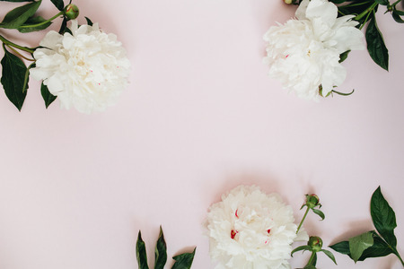 Frame of white peony flowers, branches, leaves and petals with space for text on pink background. Flat lay, top view. Peony flower texture.