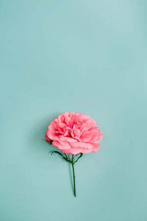 青の背景に美しいピンクのバラの花。フラット横たわっていた、トップ ビュー。