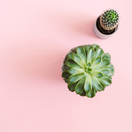 Cactus flower and succulent flower on pastel pink background. Flat lay, top view minimal concept.