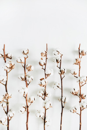 Minimal raw cotton branches on white background. Flat lay, top view. Stock Photo