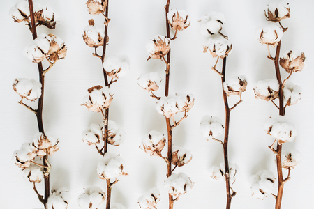 Raw cotton branches on white background. Flat lay, top view.