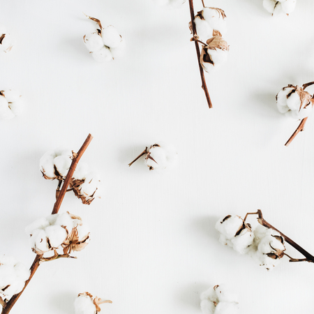 Cotton branches and buds on white background. Flat lay, top view. Stock Photo
