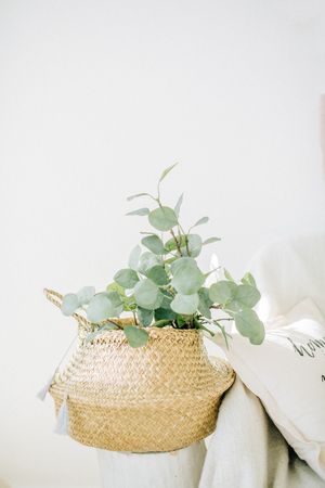 Eucalyptus branches in straw basket. Interior concept.