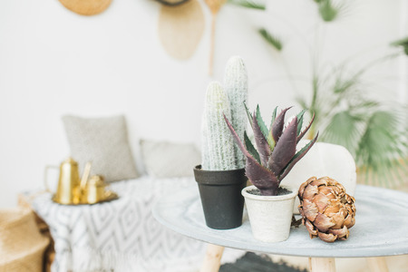 Succulent cactus in flowerpot and dry protea flower. Minimal home interior decoration. Stock Photo