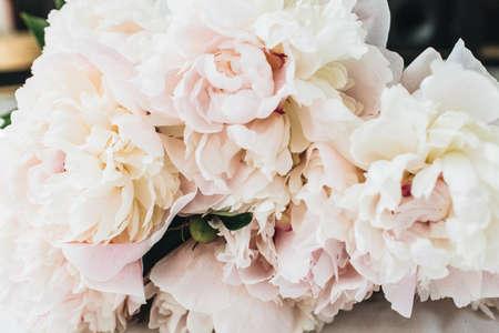Closeup of pink peony flowers on white background. Zdjęcie Seryjne