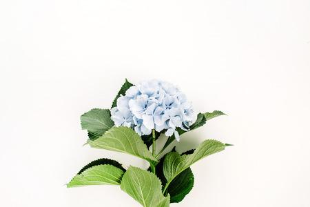 Blue hydrangea flower on white background. Flat lay, top view. Stok Fotoğraf