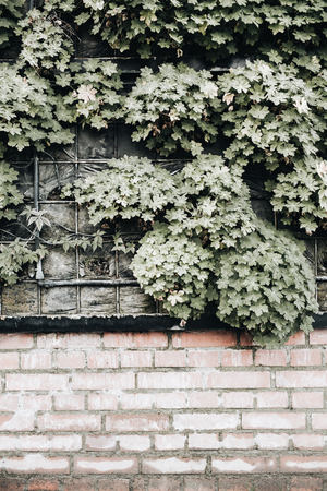 Front view of blooming plants on the brick wall.