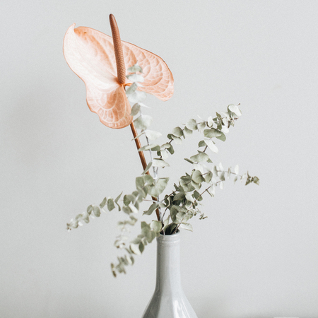 Floral bouquet of pink anthurium flower and eucalyptus branch on pastel wall. Minimal festive concept. Stock Photo
