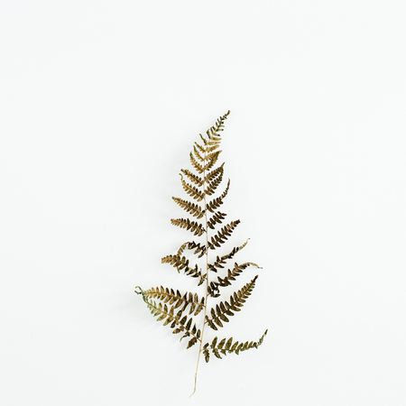 Fern leaf isolated on white background. Stok Fotoğraf