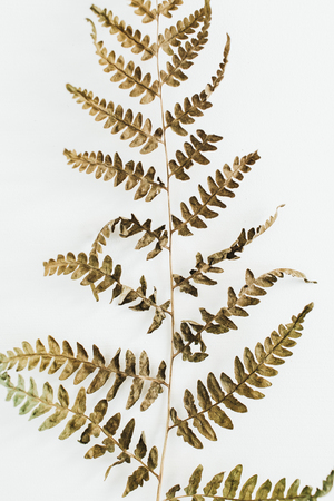 Fern branch on white background. Flat lay, top view.