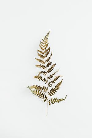 Fern leaf isolated on white background. Stock Photo