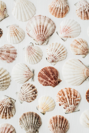 Sea shells pattern on white background. Flat lay, top view texture. Stock Photo