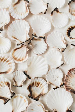 Sea shells pattern on white background. Flat lay, top view minimal marine texture.