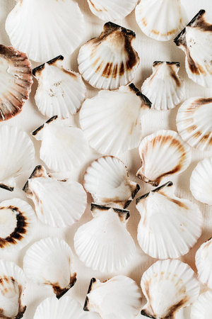 Seashell pattern on white background. Flat lay, top view minimal texture.