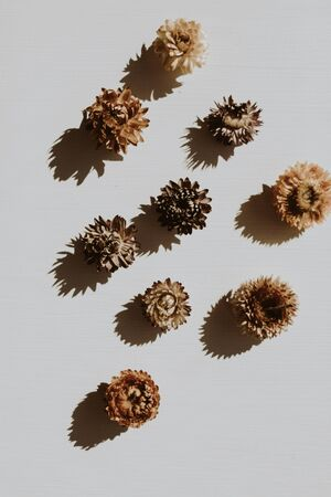 Dry flower buds on dusty grey background. Flat lay, top view minimal neutral floral composition.