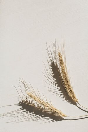 Rye  wheat spikes on white background. Flat lay, top view minimal organic healthy vegetarian food and nature concept.