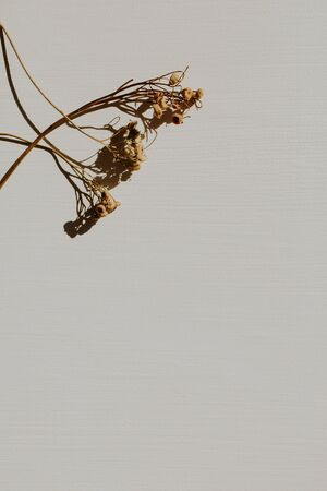 Dry branch on dusty grey background. Flat lay, top view minimal neutral floral composition.