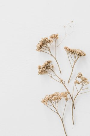 Dry floral branch on white background. Flat lay, top view minimal neutral flower composition. 写真素材