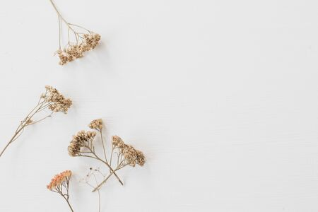 Dry floral branch on white background. Flat lay, top view minimal neutral flower composition. Stock Photo