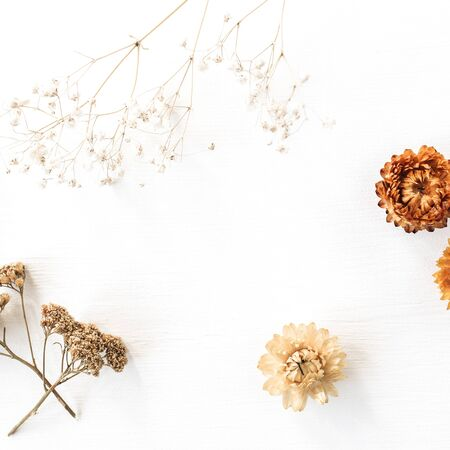 Dry floral branch and buds on white background. Flat lay, top view minimal neutral flower composition.