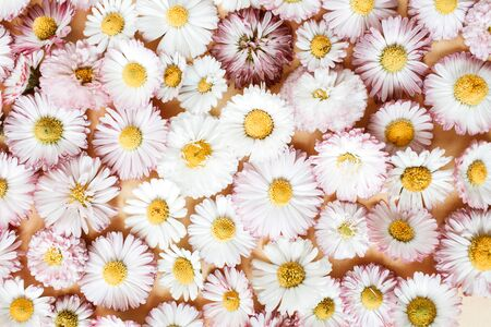 Floral composition with daisy chamomile flower buds background. Flat lay, top view florist blog hero header, summer blossom pattern. Standard-Bild - 129781803