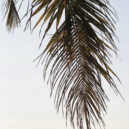 Beautiful tropical coconut palm branch. Minimalistic pattern and background with retro and vintage warm colors. Summer and travel concept. Standard-Bild - 129781835