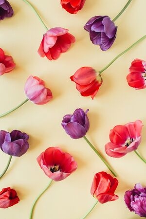 Floral composition with colorful tulip flowers on pastel background. Flat lay, top view florist blog hero header, summer blossom pattern. Standard-Bild - 129781940