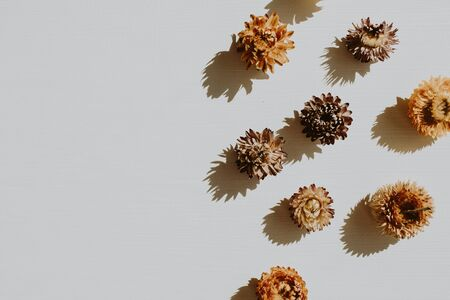 Dry flower buds on dusty grey background. Flat lay, top view minimal neutral floral composition. Standard-Bild - 129781943