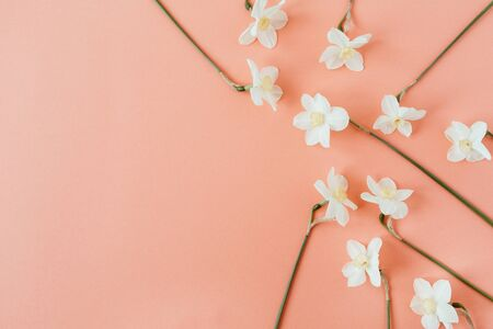Narcissus flowers pattern on living coral background. Flatlay, top view summer floral composition. Standard-Bild - 129781950